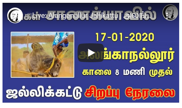 Alanganallur Jallikattu அலங்காநல்லூர் ஜல்லிக்கட்டு